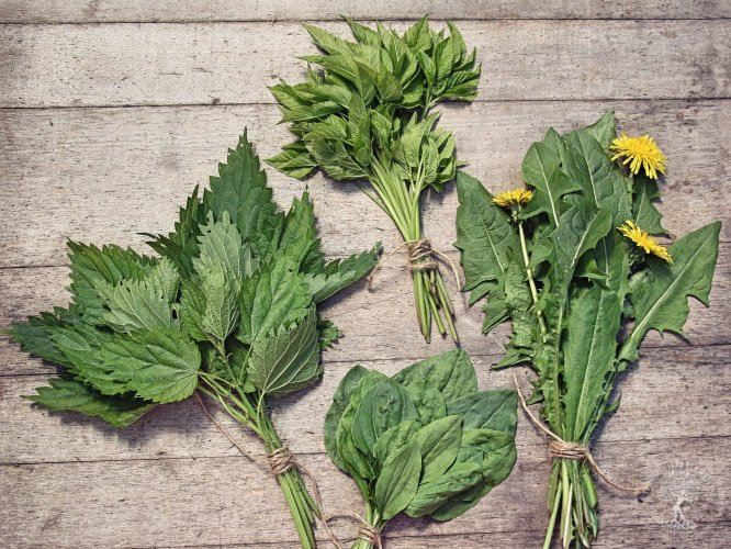 Wild vegetables on the table